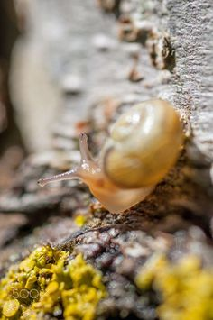 Snail by Urban Uebelhart on 500px