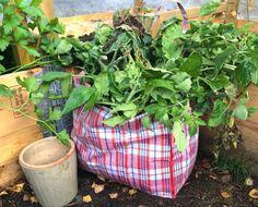 hageavfall Bokashi, Plants, Plant, Planets