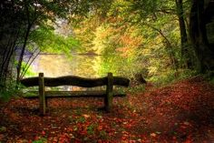 Wallpapers Seasons Autumn Forests Bench Nature Image #325552 Download