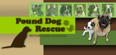 Adopting from Pound Dog Rescue is about finding the best forever home, for the dog. Learn about our application process and read answers to FAQs. Rescue Dogs, Animal Rescue, Adoption, Animals, Animales, Animaux, Animal Welfare, Animal, Animais