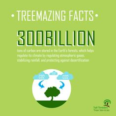 300 billion tons of carbon are stored in Earth's forests, which helps regulate its climate by regulating atmospheric gases, stabilising rainfall, and protecting against desertification. Tree Loppers, Stump Removal, Tree Felling, Forests, How To Remove, Things To Come, Facts, Woodland Forest, Woods