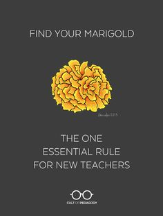 Find Your Marigold: The One Essential Rule for New Teachers First Year Teachers, Middle School Teachers, New Teachers, Teachers Toolbox, High School, Student Teacher, Teacher Hacks, Teacher Stuff, Teacher Binder