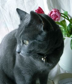 Louis < Chartreux >