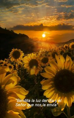 If you are new to sunset photography, then here are some Peaceful Examples of Sunset Photography you can try out. Sunset photography is a hobby that is popular Beautiful Sunset, Beautiful World, Beautiful Flowers, Beautiful Morning, Cool Pictures, Beautiful Pictures, Sunflower Wallpaper, Jolie Photo, Beautiful Landscapes