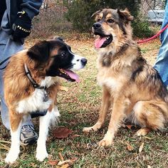 Jeb and Sadie Pet Care Tips, Sadie, Adoption, Pets, Pictures, Animals, Foster Care Adoption, Photos, Animales