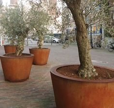 Cado tapered corten steel cylinder planters, perfect for public spaces!
