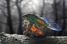 Photograph The Rise Of Cicada by shikhei goh on Scary Bugs, Mystic Garden, Animals Kissing, A Bug's Life, Black And White Background, Animal 2, Circle Of Life, Natural World, Great Photos