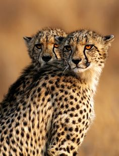 Cats. Photo: Keith Rawlins.