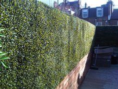 Deluxe Buxus Boxwood Artificial Hedge Panel ~ Mat ~ Instant hedge ~ 26cm x 26cm
