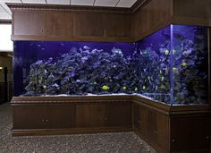 Seriously would love this aquarium in my house! Home Aquarium, Aquarium Design, Reef Aquarium, Aquarium Fish Tank, Aquarium Ideas, Corner Aquarium, Aquarium Setup, Cool Fish Tanks, Saltwater Fish Tanks