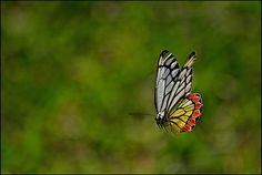 The Flying Jezebel by Ajith (അജിത്ത്), via Flickr