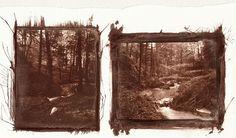 [Arborea]  Van Dyke - Test 06 -  .  Contact Print 4x5  .  (sx) Rollei Tonal 100 (dx) Rollei ORTHO 25  .  Bergger COT-320    by  ºndª