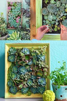 :: Can You Come Home :: Floral + Garden Inspired Living: 5 Vertical Succulent Garden Tutorials to Add to Your Weekend Project This Summer