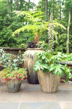 Hgtvremodels Shares Tips On How To Pick The Perfect Plants For Your Backyard Patio Dream Yard Container Gardening Ideas