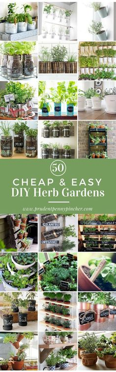 Buying fresh herbs at the grocery store can get expensive. You get a small amount for $2-$4 and the quality usually isn't that great. You can save a lot of money by having your own DIY herb garden. Herbs are easy to take care of and don't require much space. The seedlings, potting soil and pots are very inexpensive too. Also,