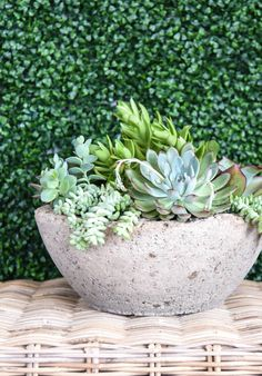 Succulents in the purple and orange color family prefer the outdoors. They will prefer your patio or deck to your darker rooms. Succulents that are really very green will do better indoors.