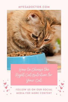 Healthy Cat Food, Cat Nutrition, Emotional Support Animal, Choose The Right, Cat Feeding, Social Media, Pets, Animals, Animales