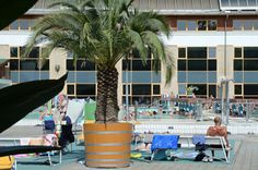 Palmtree on the beach - Harkany's thermal bath It is not only the medicinal water that has its spontaneous effect at the thermal baths at Harkany. The natural conditions are excellent: the favourable. Hungary, Marina Bay Sands, Budapest, Bugs, Building, Beach, Water, Travel, Beautiful