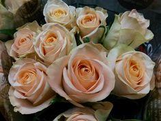 #Rose #Rosa #Myfair; Available at www.barendsen.nl