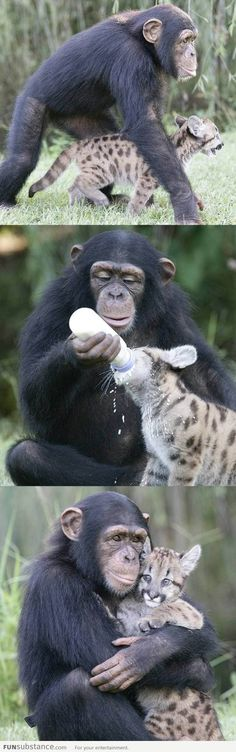 Humans should learn from animals!