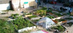 Transition Towns – preparing for a self-sufficient community-based future
