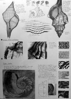 Observational study for an International GCSE Art project - A comprehensive sketchbook page based on the natural forms of shells.