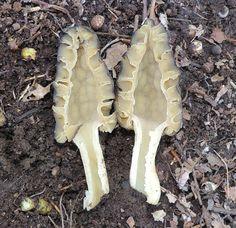 5 Easy-To-Identify Edible Mushrooms For The Beginning Mushroom Hunter | Wild Foodism