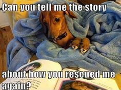The story of how you rescued your pet is a memory you will always treasure. #rescue #adoptdontshop