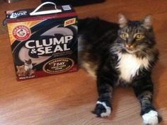 My cat loves #clumpandseal as much as I do! No odors, low dust, this is great!  #free sample from Smiley360