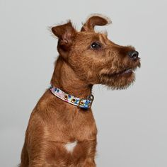 We make authentic lifestyle goods for your animal. Purchase online cotton and brass dog collar lovingly handmade in Melbourne, Australia by Animals In Charge. Cold Brew Coffee Maker, Pet Supply Stores, Coast Australia, Japanese Textiles, Coffee Lover Gifts, Large Animals, Greatest Adventure, Spring Flowers, Textile Design