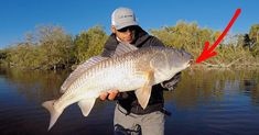 3 Tips To Catch More Redfish Out Of A School (On The Water Tactics)