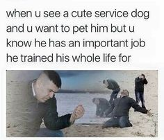 #dogmeme #servicedogs #dogline
