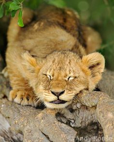 """magicalnaturetour: """" """"Sleeping Beauty"""" by Andy Rouse :) """""""