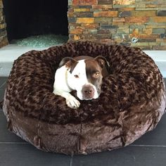 Perfect for Snuggling, the Animals Matter® Katie Puff® Orthopedic Luxury Dog Bed is a plush retreat. Generously over stuffed bolster with memory spring fiberfill and a thick NASA Certified Memory Foam Animals And Pets, Baby Animals, Cute Animals, I Love Dogs, Cute Dogs, Perros Pit Bull, Pitbulls, Dog Weight, Staffordshire Terriers