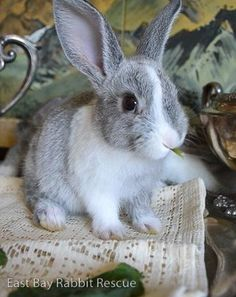 Sweet little bunny with adorable big ears!