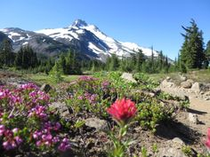If you have no finishing deadline, can start in March and have set aside sufficient funds, you can stay on the trail longer than most people. Backpacking Trails, Hiking Trails, Thru Hiking, Pacific Crest Trail, The Mountains Are Calling, Long Distance, Mount Rainier, Wilderness, Trek