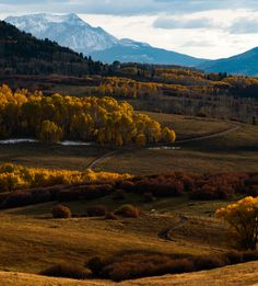 Fall in Colorado [OC][2592x2868]