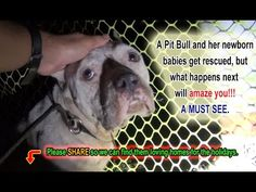 A Stray Pit Bull Gave Birth in Their Yard. Let's Help Them Find Homes by Christmas!!
