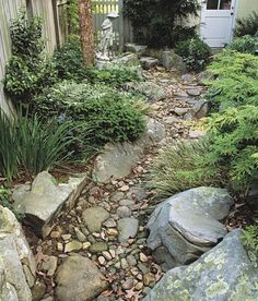 dry creek mix low shrubs