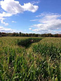 Visit: Stony Hill Farms Corn Maze {Chester, New Jersey} Corn Maze, Stony, Chester, New Jersey, Farms, Travel, Outdoor, Outdoors, Homesteads