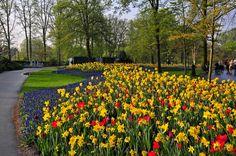 Photography Park  Flower Wallpaper
