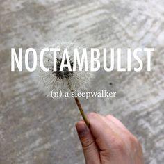 Noctambulist  näkˈtambyələst  mid 18th century origin from Latin nox, noct- 'night' + ambulare 'walk' + -ist . . #beautifulwords #wordoftheday #dandelion #summer #sleep #dreams #sleepwalking #thereisawordforeverything