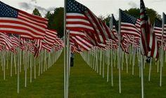 Memorial Day US Flags