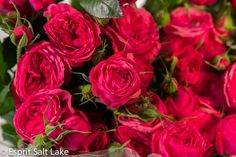 Pink Opal Gem garden spray rose hot pink