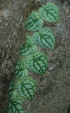 Amazing Unusual Plants To Grow In Your Garden Unusual Plants, Rare Plants, Exotic Plants, Sun Plants, Cool Plants, Indoor Plants, Hanging Plants, Fern Plant, Trees To Plant