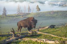 .Hayden Valley Yellowstone