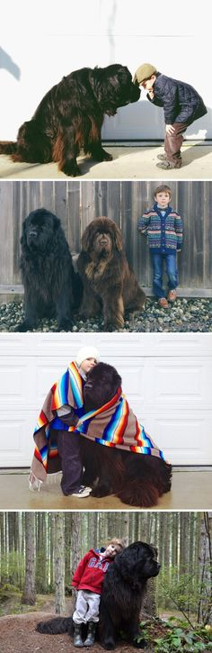 Adorable pictures of Julian and his Newfoundland Dogs- ok, now I want a Newfie!