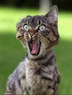 Grappige foto\'s, grappige foto\'s, stomme beelden, vrolijke foto\'s, grappige dieren, katten, honden