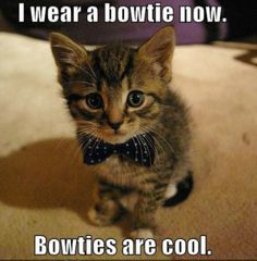 #kittens #cutecats @reviewsformeow Most Funniest Sayings | funny animals top 29 most funniest animals quotes