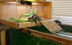♥ Pet Turtle ♥ Check out this turtle topper above tank basking platform.  Red Slider Turtle Habitat Aquarium:
